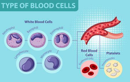 Type of blood cells illustration