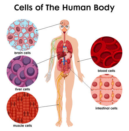 Cell of the human Body poster illustration