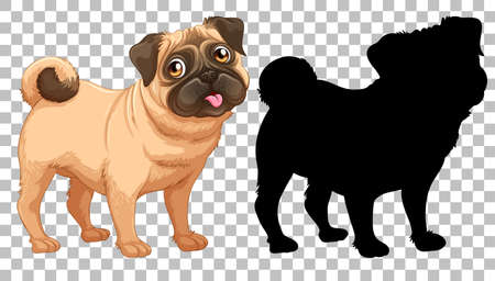 Cute pug dog and its silhouette on transparent background illustration