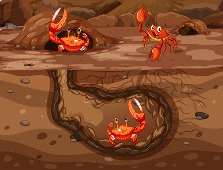 Underground animal hole with many crabs illustration 矢量图像