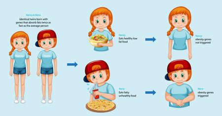 Roles of genes and environment. Body fat in identical twins infographic. illustration