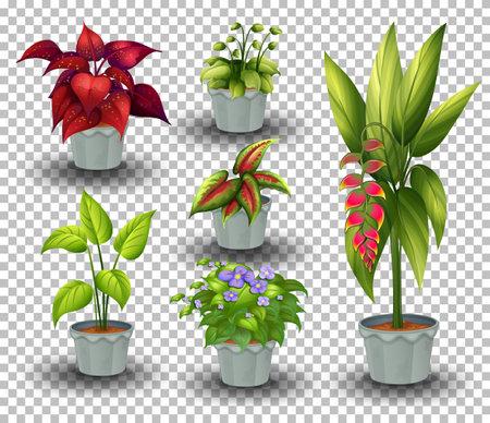 Set of plant in pot on transparent background illustration 矢量图像