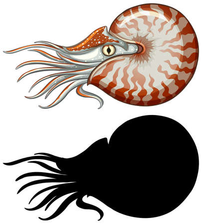 Set of nautilus characters and its silhouette on white background illustration