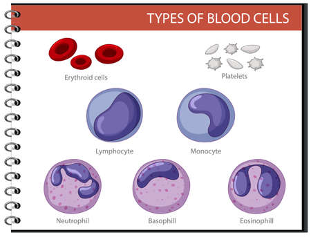 Type of blood cells illustration 矢量图像