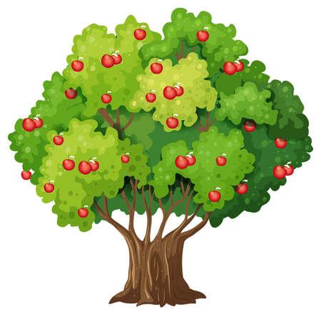 Apple tree isolated on white background illustration Vektorgrafik