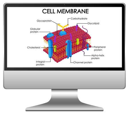 Cell membrane structure on computer desktop illustration