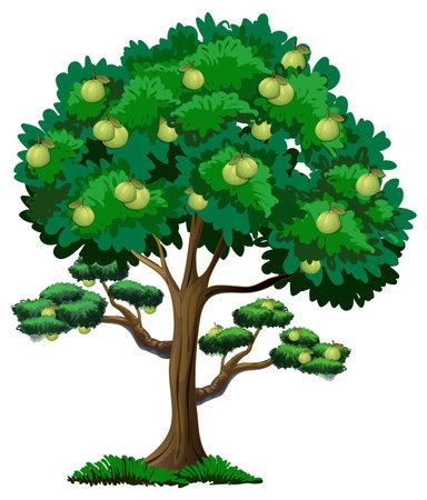 Guava fruit tree isolated on white background illustration