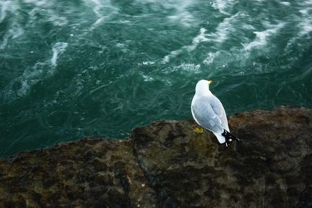 lonely bird: Lonely Bird