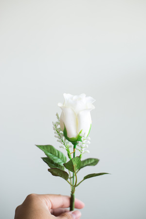 white rose on white background Stock fotó