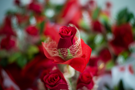 Rose, Bouquet of roses