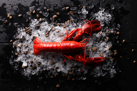 Red lobster with ice and lime,Top view of fresh Lobster