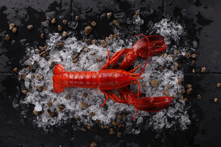 Red lobster with ice ,Top view of fresh Lobster with shadow