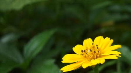 Yellow flower close photo Stock Photo