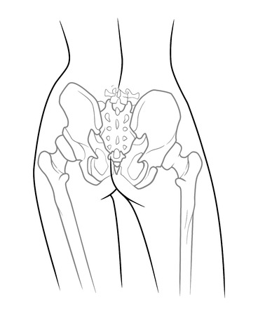 The internal structure of the pelvic girdle human skeleton, rear view. On a white background