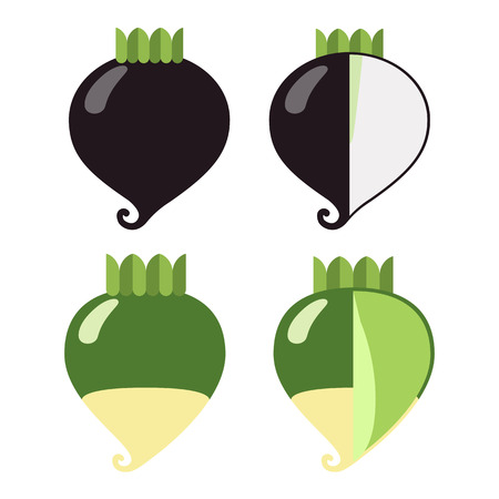 Root vegetables: radish black and green, a general view and in section, on a white background