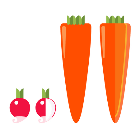 Root vegetables: radish and  carrot, a general view and in section, on a white background