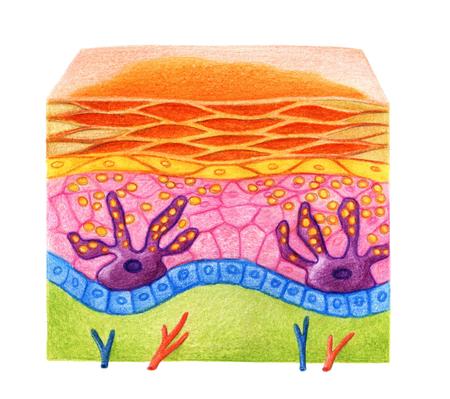 Structuur van de huid met sproeten op een witte achtergrond Stockfoto