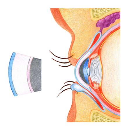 Structure of eyes  on white background