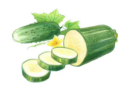 Still life of  cucumbers and zucchini. Drawing with colored pencils, isolated on white background