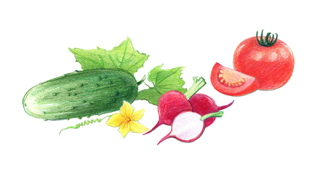 Still life of tomatoes, radishes,  and cucumbers. Drawing with colored pencils, isolated on white background