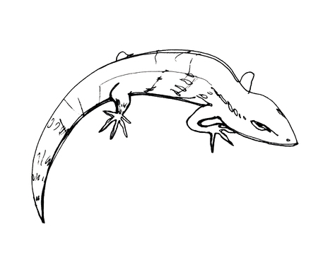 Lizard. Sketch. Graphic drawing with a pen. Ink. Isolated on white background
