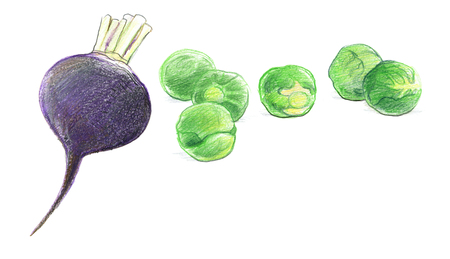 Black radish and Brussels sprouts. Graphic drawing with colored pencils. Isolated on white background