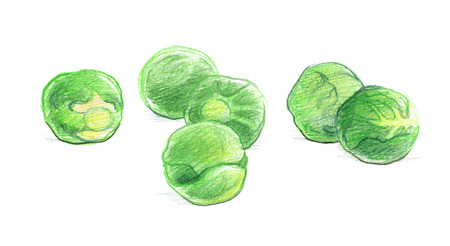 Brussels sprouts. Graphic drawing with colored pencils. Isolated on white background Stock Photo