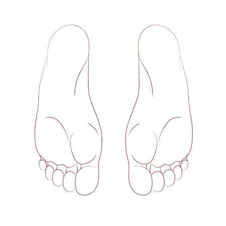 The sole of human foot, realistic anatomical linear pattern. Graphic line. Isolated on white background