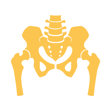 Fragment of the structure of the human skeleton. Pelvic girdle and thighs. Silhouette, sign vector illustration. Illustration