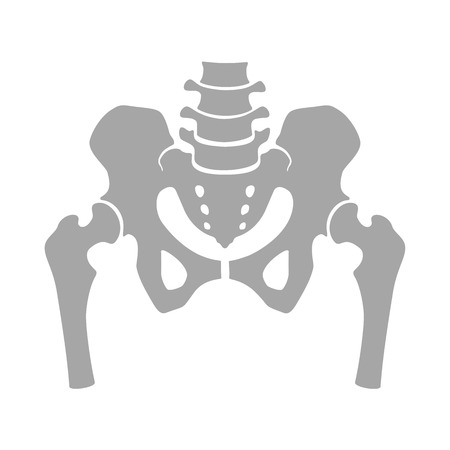 Fragment of the structure of the human skeleton. Pelvic girdle and thighs. Silhouette. Sign. Stock Photo