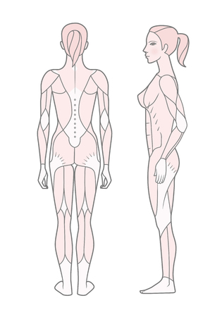 Template. Scheme of the musculature of a woman. Side and rear view. Vector. Isolated on white background. Illustration