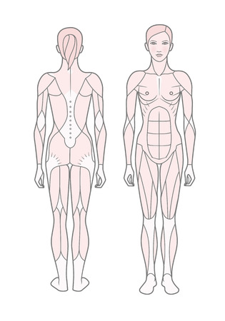 Template. Scheme of the musculature of a woman. Front and rear view. Vector. Isolated on white background.
