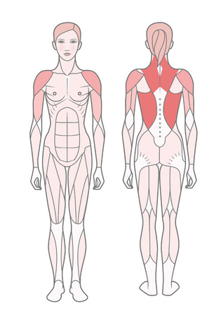 Figure of the woman, the scheme of the basic trained muscles. Front and rear view.