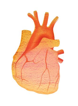 Human heart Digital illustration isolated on white background.