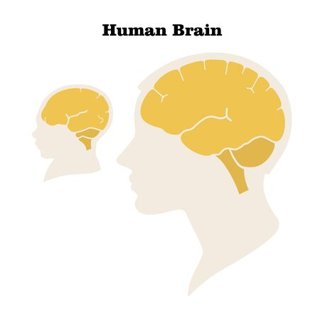 Comparison of the size and characteristics of the brain and head of an adult and a newborn. Silhouette. Flat design. Vector image