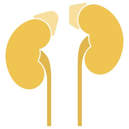 Human internal organs: kidneys, adrenal glands and ureters. Vector image. Flat design