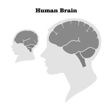 Comparison of the size and characteristics of the brain and head of an adult and a newborn. Silhouette. Flat design.
