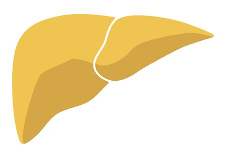 Human internal organs: liver.Flat design