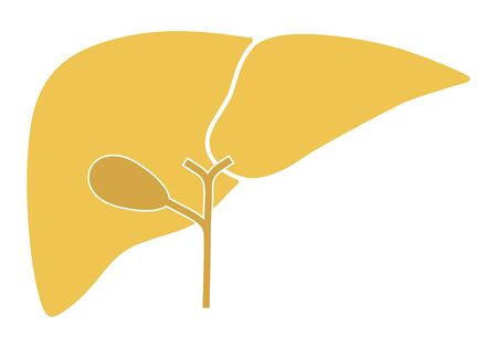Human internal organs: liver and gall bladder. Flat design
