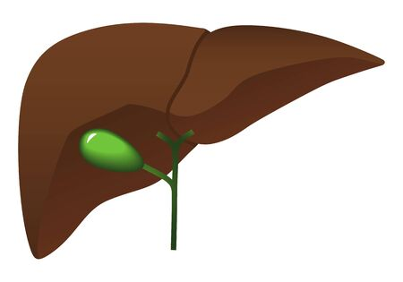 Human internal organs: liver and gall bladder.Flat design. Illustration.