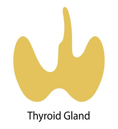 Human internal organ: thyroid gland. Illustration. Flat design Imagens