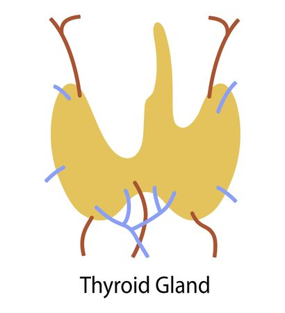 Human internal organ: thyroid gland and circulatory system.  Flat design