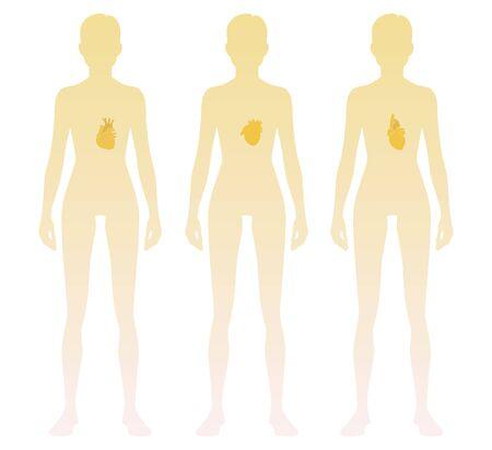 Silueta de mujer con ubicación de corazón en el cuerpo. Ilustración vectorial
