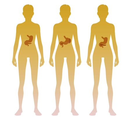 Woman silhouette with stomach, pancreas, spleen location on body. Illustration