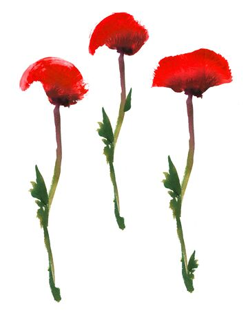 Set of red poppy flower on a green stem.  and gouache drawing isolated on white background