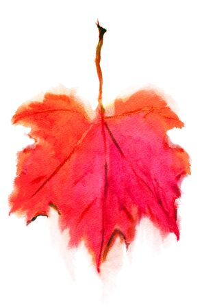 Autumn maple leaf in red and orange, isolated on a white background. Watercolor drawing