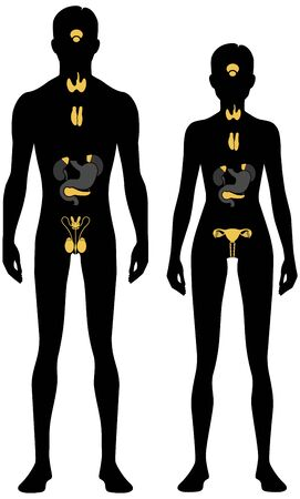 Endocrine system. Male and female body silhouette. Isolated perfect image symbols on white background. Vector illustration.