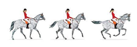 Horse gait, Three main gray horse gait: step, lynx, gallop.
