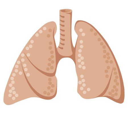 Lungs in flat design. Lungs health. Human lungs icon. Internal organ. Respiratory system illustration. Isolated on white background. Stok Fotoğraf