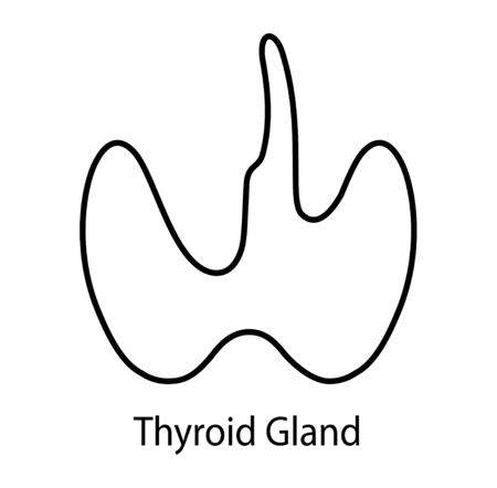 Human internal organ: thyroid gland and circulatory system. Vector line art image.